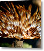 Feather Duster Metal Print