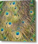 Feather Finesse Metal Print