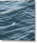 Feather From Heaven Metal Print