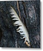 Feather In Burnt Tree Metal Print
