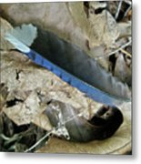 Feather On The Forest Floor Metal Print