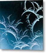 Feathered Frost Metal Print