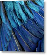 Feathered Metal Print