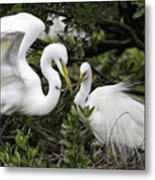 Feathering Their Nest Metal Print
