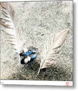 Feathers And Mussel Metal Print