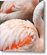 Feathers Of Flamingo Metal Print