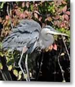 Feathers Ruffled Metal Print