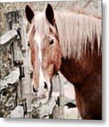 February Horse Portrait Metal Print