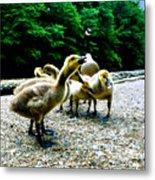 Feed Me Seymore - Baby Geese Metal Print