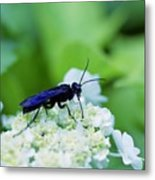 Feeding Insect Metal Print