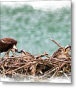 Feeding The Little Ones Metal Print