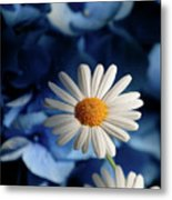 Feeling Blue Daisies Metal Print