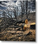 Felled After The Wildfire Metal Print
