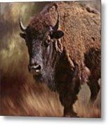 Female Buffalo Metal Print