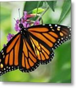 Female Butterfly Metal Print
