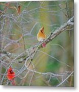 Female Cardinal And Friends Metal Print