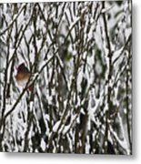 Female Cardinal In The Snow Metal Print