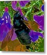 Female Carpenter Bee On Penstemons Metal Print