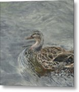 Female Duck Metal Print