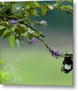 Female Great Mormon Butterfly On A Branch Metal Print