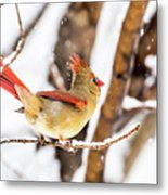 Female Northern Cardinal In The Snow Metal Print