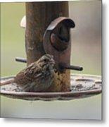 Female Sparrow On Birdfeeder Metal Print
