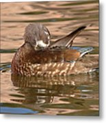 Female Wood Duck Preening On The Water Metal Print