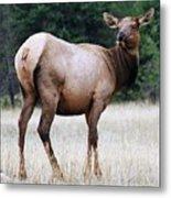 Feme Elk Metal Print