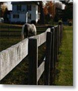 Fence Line Metal Print