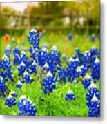 Fence Me In With Flowers Metal Print