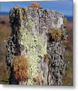 Fence Post Encrusted With Lichen  Metal Print