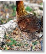 Feral Bird Metal Print