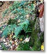 Fern And Moss I Metal Print