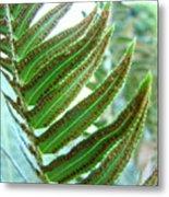 Fern Art Print Green Forest Ferns Baslee Troutman Metal Print