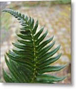 Fern Art Prints Green Garden Fern Branch Botanical Baslee Troutman Metal Print