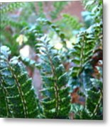 Fern Art Prints Green Sunlit Forest Ferns Giclee Baslee Troutman Metal Print
