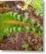 Fern Branch Leaves Art Prints Forest Ferns Natures Baslee Troutman Metal Print