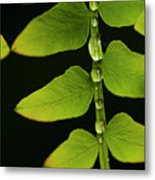 Fern Close-up Nature Patterns Metal Print