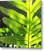 Fern Delight Metal Print