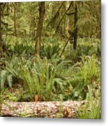 Fern Forest Metal Print