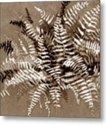 Fern In Sepia Metal Print