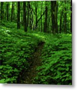 Fern Lined At In Ma Metal Print