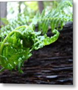 Fern On Redwood Tree Art Print Baslee Troutman Metal Print