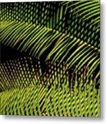 Fern-palm Abtract Metal Print