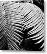 Fern Room Cycads Metal Print