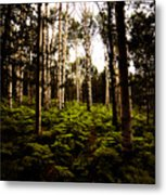 Ferns And Aspen Metal Print