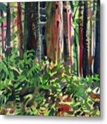 Ferns And Redwoods Metal Print