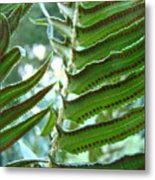 Ferns Art Prints Green Forest Fern Sunlit Giclee Baslee Troutman Metal Print