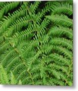 Ferns Au Naturale Metal Print