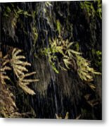 Ferns Below Falls By Jean Noren Metal Print